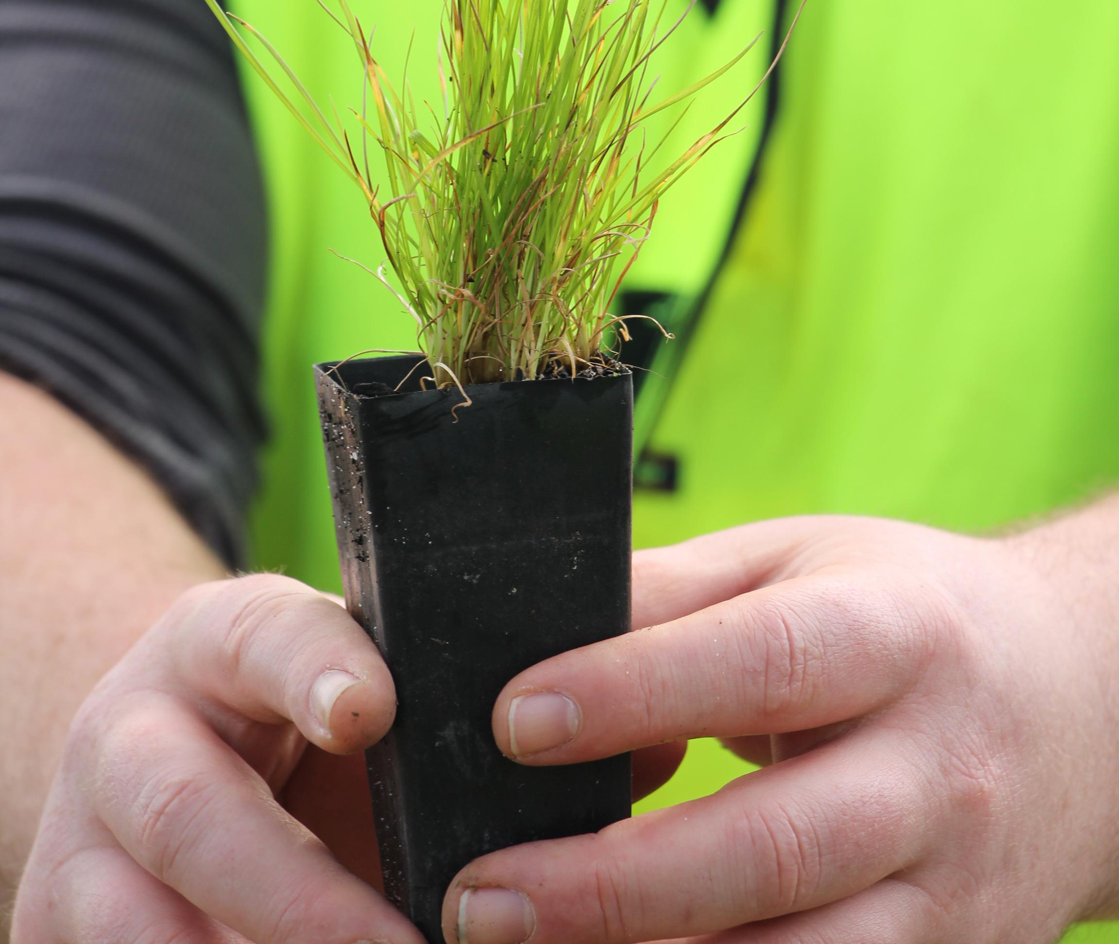 Den australske miljøorganisation Greenfleet planter træer som klimakompensation for CO2-udledning. Foto: Greenfleet Australia