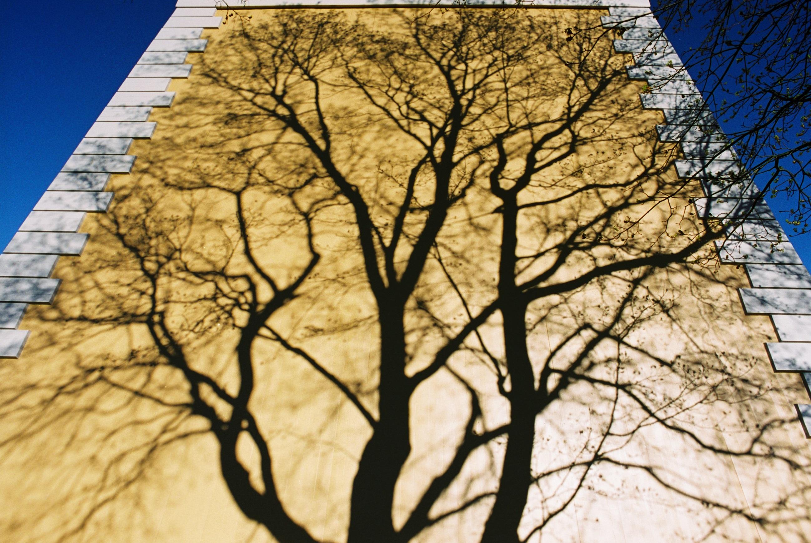 træ vækst mur